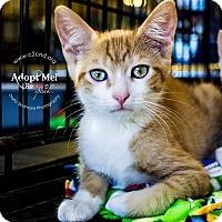 Adopt A Pet :: A..  Bennett - Mooresville, NC