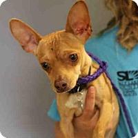 Adopt A Pet :: CHARLIE - Salt Lake City, UT
