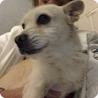 Adopt A Pet :: Paxton - Friendswood, TX