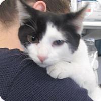 Adopt A Pet :: Simon - Germantown, MD