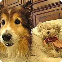 Adopt A Pet :: Teddy - La Habra, CA