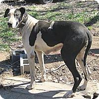 Adopt A Pet :: Alabama - Manassas, VA