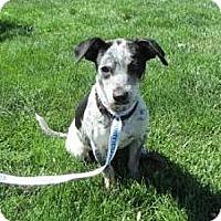 Adopt A Pet :: Hiway - Sacramento, CA