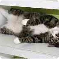Adopt A Pet :: Fernando - Marietta, GA