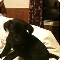 Adopt A Pet :: Slate - Glastonbury, CT