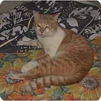 Adopt A Pet :: Rambo - Shelton, WA