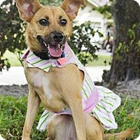Adopt A Pet :: Bunny - Coral Springs, FL