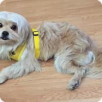 Adopt A Pet :: Tripod - Las Vegas, NV