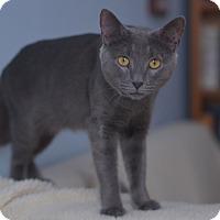 Adopt A Pet :: GT - Brooklyn, NY