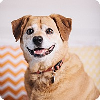 Adopt A Pet :: Lucy Lu - Portland, OR