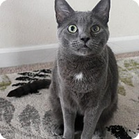 Adopt A Pet :: I'M JOSEPH BUT MY FAMILY CALLS ME VADER KITTEN! - jacksonville, FL