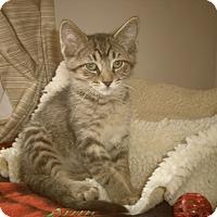 Adopt A Pet :: DARREN - Medford, WI
