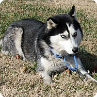 Adopt A Pet :: Angelina - Erwin, TN