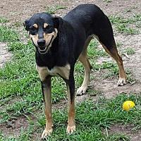 Adopt A Pet :: Winnie LB CP - Providence, RI