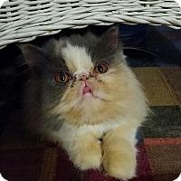 Adopt A Pet :: Torie - Columbus, OH