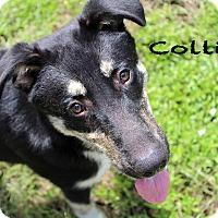 Adopt A Pet :: Collide - Texarkana, AR
