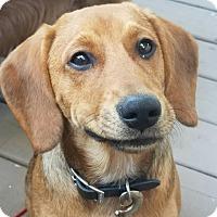 Adopt A Pet :: Jordan-adoption pending - Schaumburg, IL