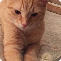 Adopt A Pet :: Redd - Covington, KY