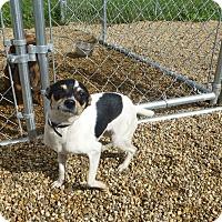 Adopt A Pet :: Sadie - Wyanet, IL