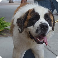 Adopt A Pet :: Moe - Bellflower, CA