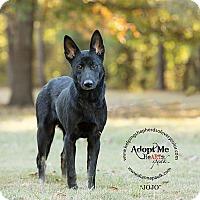 German Shepherd Dog Dog for adoption in Montgomery, Alabama - Jo Jo
