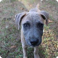 Adopt A Pet :: Fiona - Weeki Wachee, FL