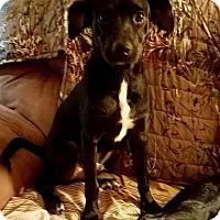 Adopt A Pet :: Jake - Houston, TX