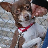 Adopt A Pet :: Rascal - Berea, OH