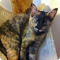 Adopt A Pet :: Rose Marie Di - Lombard, IL