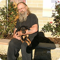 Adopt A Pet :: Mariah - Evensville, TN