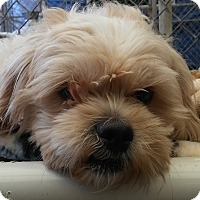 Adopt A Pet :: PRINCE - Dallas, TX