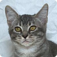 Adopt A Pet :: Urma V - Sacramento, CA