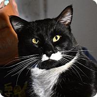 Adopt A Pet :: Holbrook - Los Angeles, CA