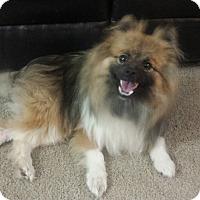 Adopt A Pet :: Wobbles - Davis, CA
