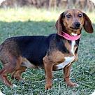 Adopt A Pet :: Kippy