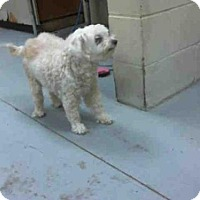 Adopt A Pet :: BARBIE - Conroe, TX