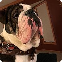 Adopt A Pet :: Tyson - Decatur, IL