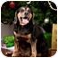 Photo 1 - Beagle/Cocker Spaniel Mix Dog for adoption in Owensboro, Kentucky - Zeus