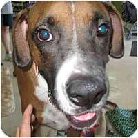 Adopt A Pet :: Rocco - Phoenix, AZ