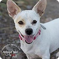 Adopt A Pet :: Lola - Scottsdale, AZ