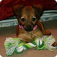 Adopt A Pet :: Mya - Brattleboro, VT