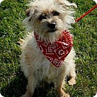 Adopt A Pet :: MaeMae - Green Bay, WI