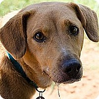 Adopt A Pet :: Sophie - Knoxville, TN