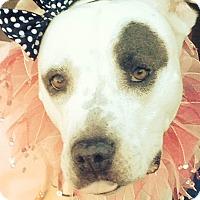 Adopt A Pet :: Annie - Redondo Beach, CA
