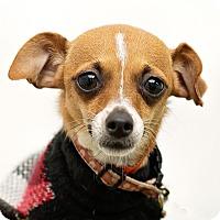 Adopt A Pet :: Sassy - Westfield, NY