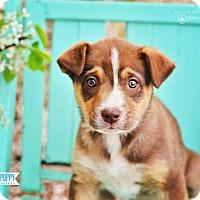 Adopt A Pet :: Brisby - Peachtree City, GA
