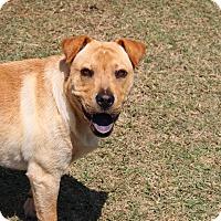 Adopt A Pet :: Charlie - Pinehurst, NC