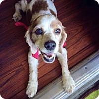 Adopt A Pet :: Daisy--ADOPTED!! - Sacramento, CA
