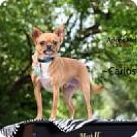 Adopt A Pet :: Carlos - Shawnee Mission, KS