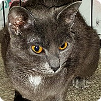 Adopt A Pet :: Isabelle - brewerton, NY